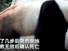 泰媒称大熊猫创创气管内有不明物