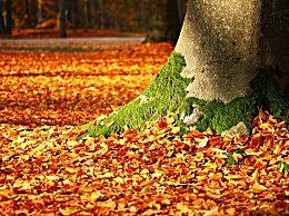 秋分过后是什么节气 秋分的气候特点