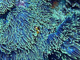 2070地球珊瑚礁或消失 敦促全人类解决珊瑚礁生态系统退化问题