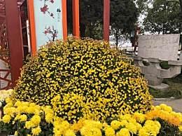 哈尔滨赏菊花去哪儿?中国亭园在哪儿?