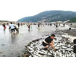 浙江惊现飞鱼奇观站着不动飞到你手里 飞鱼奇观鱼从哪里来?