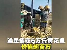 渔民捕获6万斤黄花鱼 靠劳动一夜暴富