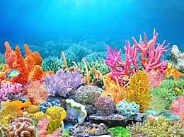 2070珊瑚礁或消失 全球�暖����珥�之��