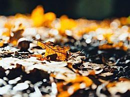 关于秋分节气的谚语有哪些?秋分节气谚语农谚汇总