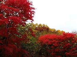 哈尔滨赏红叶几月去最好?哈尔滨金龙山红叶谷旅游攻略收下吧!