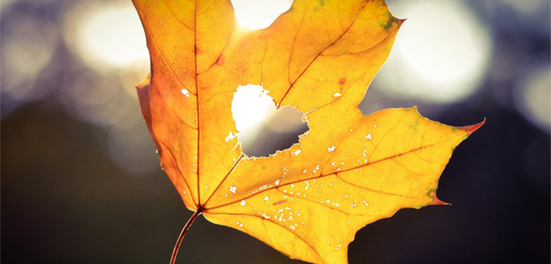 秋分的传统习俗有哪些?这些秋分习俗你了解多少