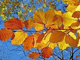 关于秋分的经典诗词有哪些?关于秋分的经典诗词赏析