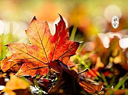 有关秋分的古诗词有哪些?秋分最美20首古诗词精选