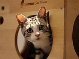 猫咪为什么会埋大便?小猫埋大便的原因是什么