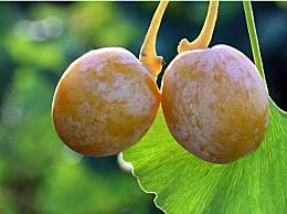 银杏果怎么吃不中毒 银杏果吃法大全汇总