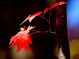 秋天伤感味美的句子汇总 秋天文艺范的句子说说心情推荐