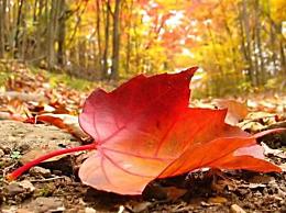 描写初秋深秋景色的味美伤感诗句 初秋深秋的特点各是什么
