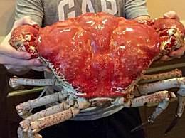 世界上最大的螃蟹 一个重达40多公斤