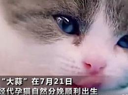 中国首只克隆猫回家 主人花费25万元克隆爱宠