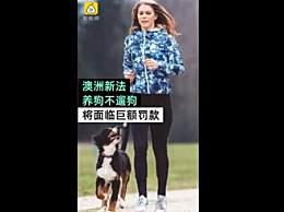 澳洲规定养狗不遛狗将违法 承认宠物是有意识动物