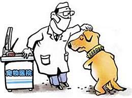 世界狂犬病日宣传口号一览 狂犬病有哪些典型症状