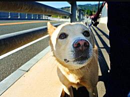 坐火车能不能携带宠物 过火车安检能查出宠物吗?