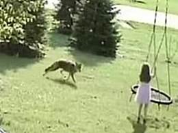 现实版小红帽 美国女孩自家玩耍竟然遇到狼