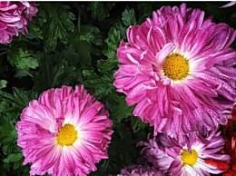 开封菊花节几月几号开始?今年的主会场在哪儿?