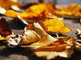 描写秋天的古诗词都有什么 关于秋天的古诗词鉴赏汇总
