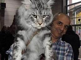 世界上最大的猫 体重能超25斤