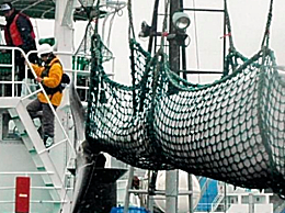 日本捕1430吨鲸肉