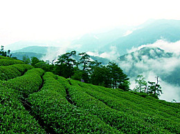 中国最贵的茶叶是什么茶 中国最贵的茶叶多少钱一斤