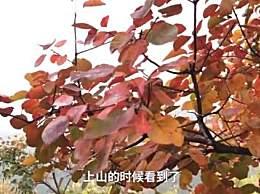 北京香山红叶什么时候红?香山赏红叶需要几个小时?