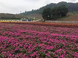 秋天上海周边去哪儿赏花好?上海周边赏花基地推荐