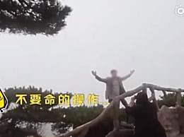 游客爬到黄山悬崖的松树上拍照 路人直呼不要命的操作