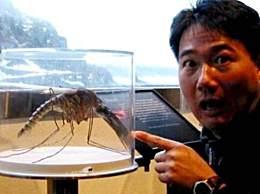 世界上最大的蚊子 身长11厘米太恐怖