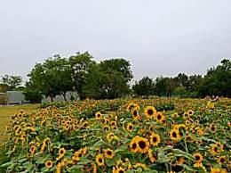 上海秋季赏花怎么玩?上海周末赏花八大公园推荐