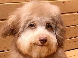 天下奇闻!美国一小狗竟长着一张人脸