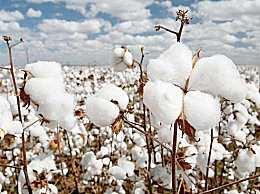 抖音我想去摘棉花是什么梗?抖音我想去摘棉花出自哪里?
