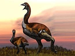 世界上最大的鸟 体重近1600近堪称庞然大鸟