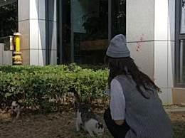 95后立遗嘱财产留给猫 24岁少女为何早早立遗嘱