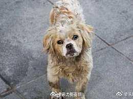 超14天未领养流浪犬可安乐死 人性化举措被赞