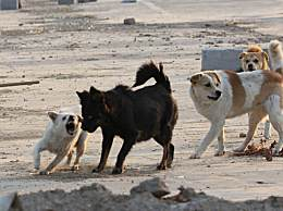 超14天无人领养流浪犬可实行安乐死 你怎么看