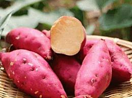 长期吃红薯有什么危害
