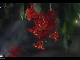 偶然发现的一天中红色的花是什么花