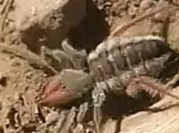 游客南非发现八条腿神秘生物 疑似蜘蛛蝎子合体