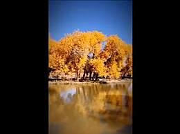 盘点国内最美的六大胡杨林 错过就要再等一年