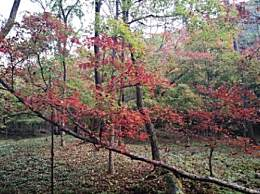 盘点国内赏红叶的八大地方 你去过几个?