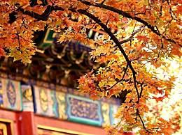 国内赏红叶十大好地方推荐 感受秋日胜春朝的美景