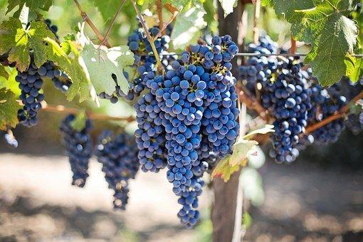 purple-grapes-553464__340.jpg