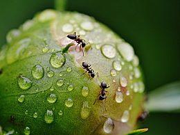家里出现了蚂蚁怎么能除根