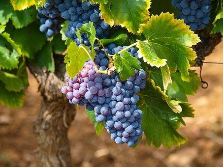 vines-1747224__340.jpg