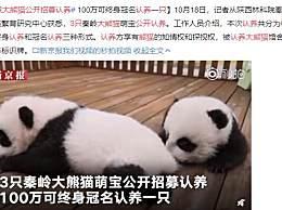 三只大熊猫公开招募认养 网友:没有领回家使劲rua的权吗