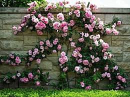 世界上最美的花 彼岸花竟然真实存在