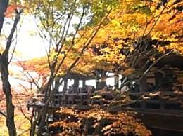 去日本赏红叶几月去最好?10月去赏红叶好玩吗?